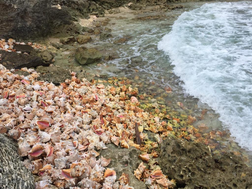 guadalupe conchiglie Mar dei Caraibi, Oceano Atlantico