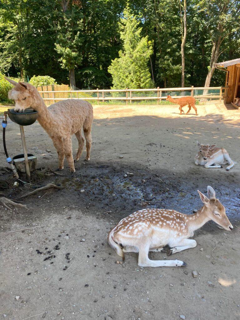 Animali della villa
